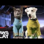 Star Trek: Into Barkness – Pawsplay